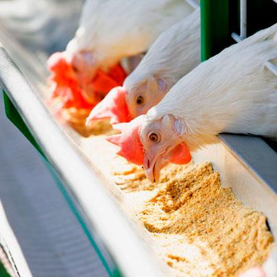 Reporte - Comercio Internacional - Importaciones - Insumos Avícolas